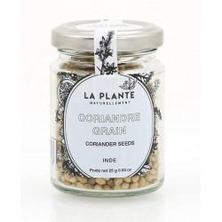 Coriandre Grain Bio pot de 25 Grs